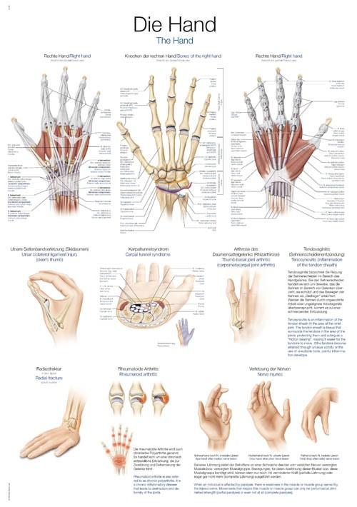 Die Hand