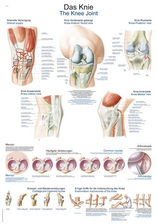 Das Knie