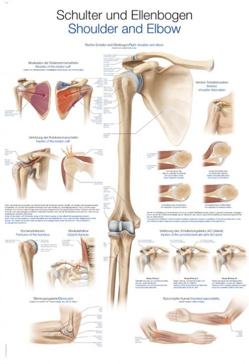 Schulter und Ellenbogen